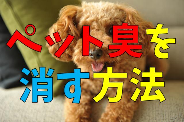 犬 の オシ っ こ 匂い 消し
